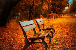 Two benches in a park with autumn leaves.
